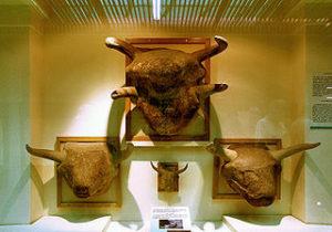 320px-Ankara_Muzeum_B20-08